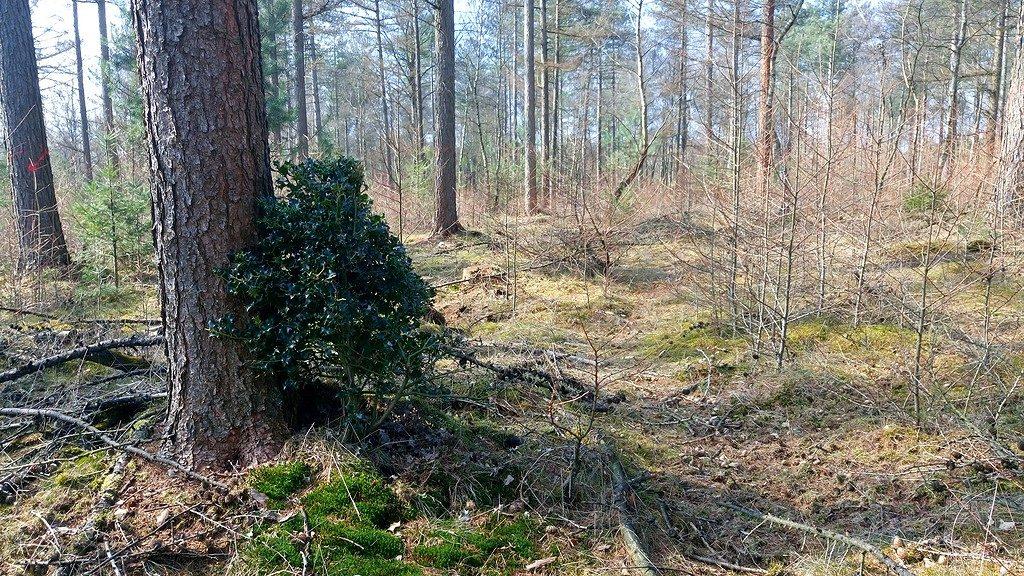 edelhert knabbelboom
