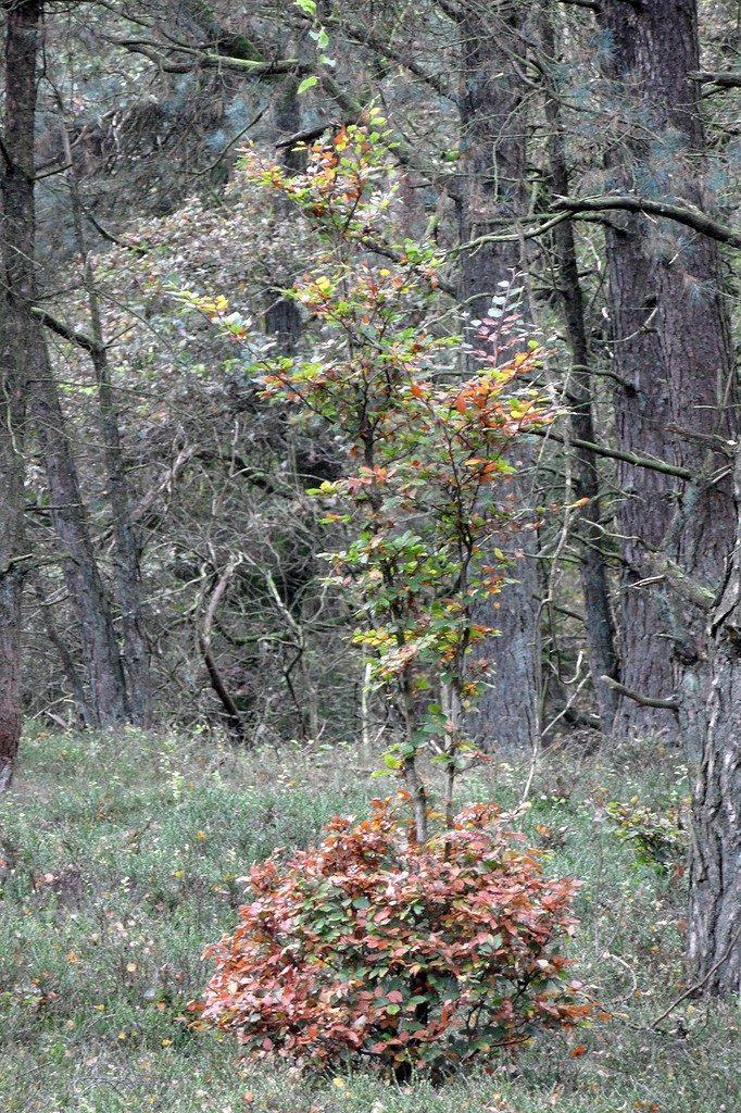 edelhert knabbelboom 2