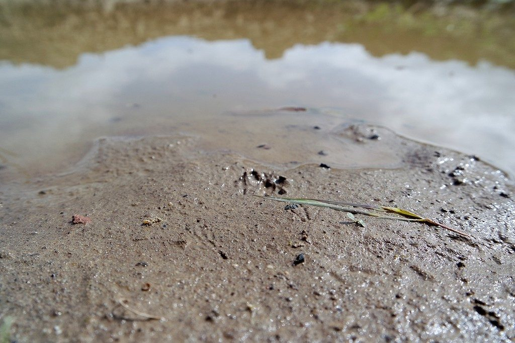 zwaluwen modderverzamelplaats huiszwaluw