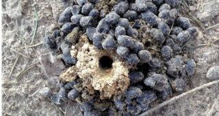 Determinatie van kleine holen in de grond