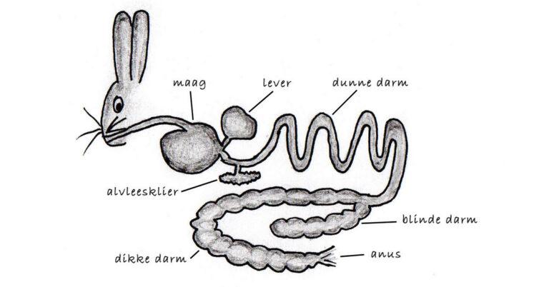 Caecotrofie en coprofagie bij dieren